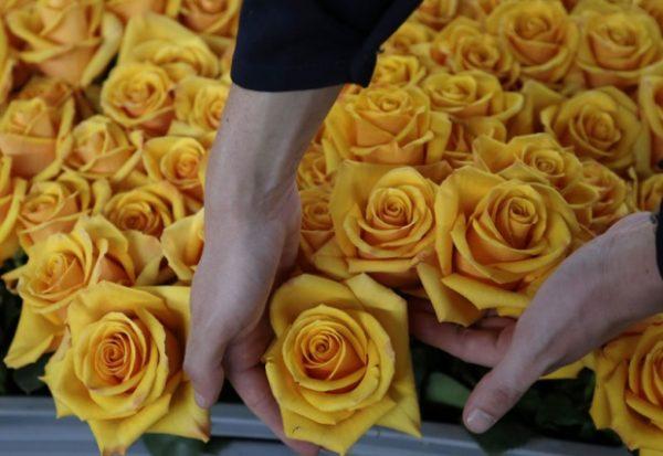 Evropska unija polovinu ruža uvozi iz Kenije