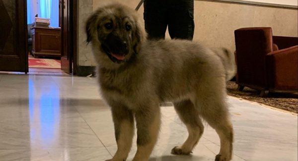 EKSKLUZIVNO: Fotografije psa kojeg će PUTIN dobiti od VUČIĆA!