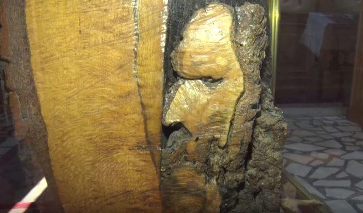 ЧУДО ПРАВОСЛАВЉА: Појавио се светац у дрвету и крст у корену! (ВИДЕО)